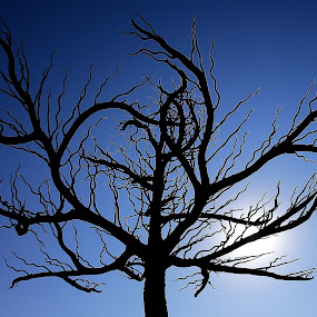Beautifully barren... by Sridhar Balasubramanian - Nature Up Close Trees & Bushes ( tree, autumn, leafless, silhouette, fall )