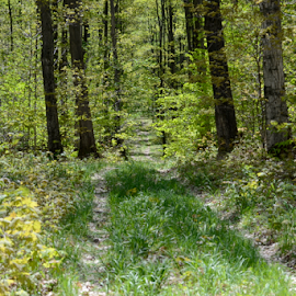 Early Spring Old State Rd by Tina Tippett - Landscapes Forests ( forests, trees, landscapes,  )