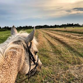 by Ivana Tilosanec - Animals Horses ( horse, landscape photography, horseback, nature, animal, nature and wildlife, nature photography, landscape, naturelovers )