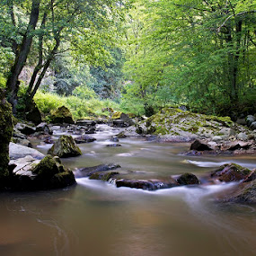 by Siniša Almaši - Nature Up Close Water ( forest, view, rocks, nature, light, natural light, stones, river, water, trees, colours )