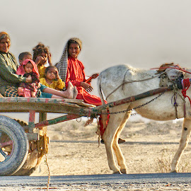 Traveller by Abdul Rehman - Transportation Other ( ladies, desert, colors, donkey, cart, people )
