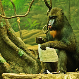 The Paper by Kristin Patota - Animals Other Mammals ( mandrill )