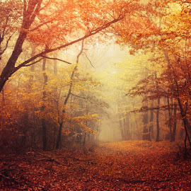 Illumination Theory I. by Zsolt Zsigmond - Landscapes Forests ( scenics, forest, yellow, leaf, landscape, sunlight, light - natural phenomenon, orange color, nature, tree, season, fog, autumn, outdoors, branch, woodland, sunbeam )