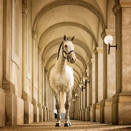 Horse at the Palace by Erik Kunddahl - Animals Horses ( equine, horse, ridingsport, nikon, palace )