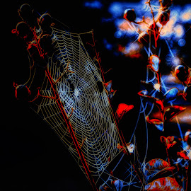 Harvest Web by Dave Walters - Nature Up Close Trees & Bushes ( spider web, fall, nature, lumix fz200, colors )