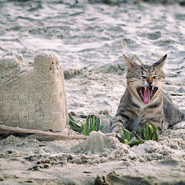 Guarding The Castle by Giannis Paraschou - Animals - Cats Portraits ( canon, cats, sand, see, guard, sandcaslte )