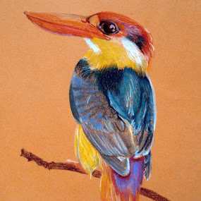 Kingfisher by Jasna Dragun - Painting All Painting ( bird, pastel, painting )