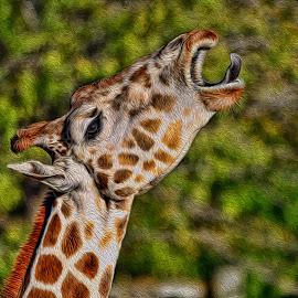 Giraffe Art by Hylas Kessler - Digital Art Animals