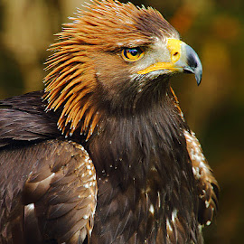 Profil impérial by Gérard CHATENET - Animals Birds