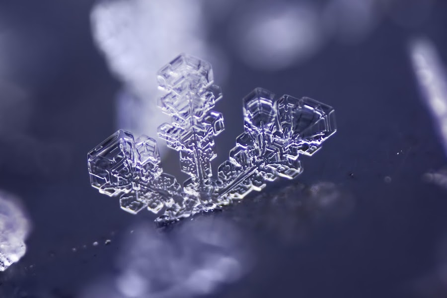 December Frost by Evan Ludes - Nature Up Close Water ( december, macro, winter, icy, ice, snow, frost, snowflake, crystal )