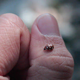 Ladybug on my Thumb by Marc and Stefanie Moody - Novices Only Wildlife ( hand, bug, ladybug, insect, thumb, beetle )