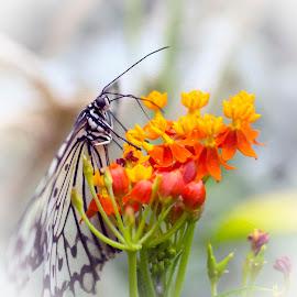 Sue's Butterfly by Peter Miller - Digital Art Animals