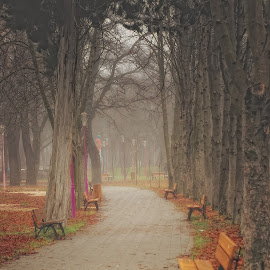 by Came Lia - City,  Street & Park  City Parks