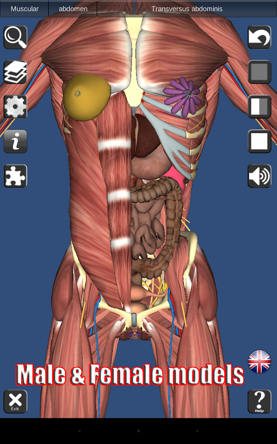 3D Anatomy Screenshot 13