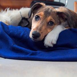 Noel a 2 mesi by Orazio Mariani - Animals - Dogs Puppies ( piccolo )