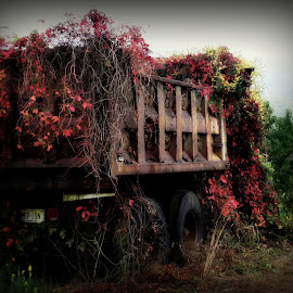 Over Grown by Kenneth Cox - Artistic Objects Other Objects ( fall colors, truck, weeds, autumn colors, old truck )