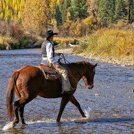 Across The River by Twin Wranglers Baker - Transportation Other ( horseback riding, cowboy, horse and rider, montana, western riding, river )