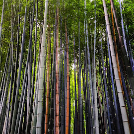 The Forest by Noa Simacoski - City,  Street & Park  City Parks ( picture, colorful, forest, photography )