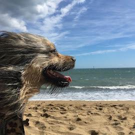 Hapy ¡ by Jose Maria Vidal Sanz - Animals - Dogs Portraits ( hapy, pet, beach, dog )