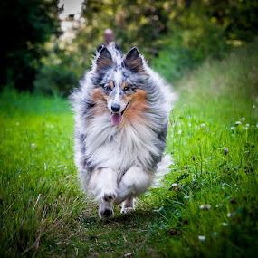 by 'Monique Smit - Animals - Dogs Running ( bokeh )