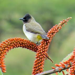 by Geraldine Angove - Animals Birds