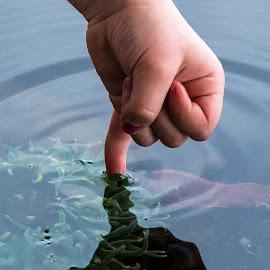 A finger in water by Keith Sutherland - Babies & Children Hands & Feet ( water, aquarium, finger )
