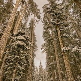 by Trisha Payne - Landscapes Forests