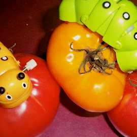 real tomatoes/worms by Traceystar Meyer - Novices Only Objects & Still Life