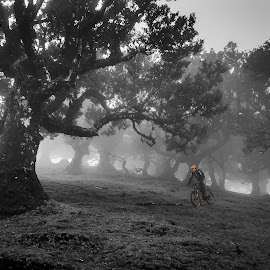 Dark wood by Morten Jørgensen - Sports & Fitness Cycling ( mountainbike, bike, black and white, trees, madeira )