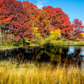Fall Colors by Sarthak Bisaria - City,  Street & Park  City Parks ( blue sky, fall colors, grass, state park, trees, pond )