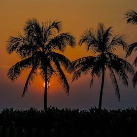 The scene at sunset by Hariharan Venkatakrishnan - City,  Street & Park  Vistas
