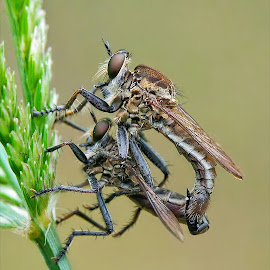 Mating  by Feriq Saleh - Instagram & Mobile Android