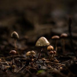 after the rain by Cyndi Caron - Nature Up Close Mushrooms & Fungi ( mushroom, fungi, nature, rainy day, forest floor )