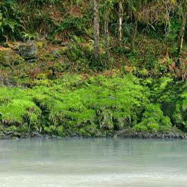 by Tara Bauman - Nature Up Close Water ( water, washington, nature, green, forest )