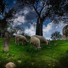 Pastoral by Murat Besbudak - Landscapes Prairies, Meadows & Fields ( aydın, kuşadası, yaylaköy, turkey )