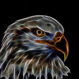 Electric Eagle by Brian Brown - Digital Art Animals ( eagle, national symbol, bald eagle, wildlife, usa, birds )