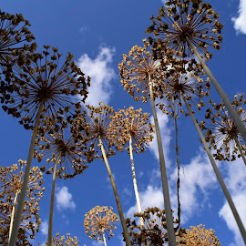 Seed heads. by Denton Thaves - Nature Up Close Other plants ( seed head )