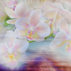 Orchid Rainbow by Millieanne T - Digital Art Things