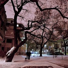 Winter in Odessa by Elena Tishchenko - City,  Street & Park  Street Scenes ( winter, january, snow, cityscape, city )