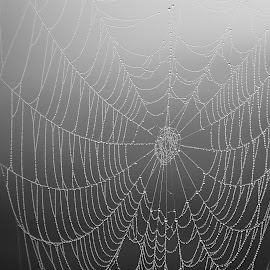 by Meghan Laverty - Nature Up Close Webs (  )