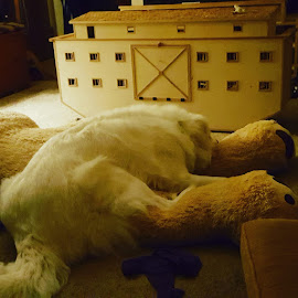 Big White Fluffy Dog on Giant Teddy Bear by Suzette Christianson - Animals Other