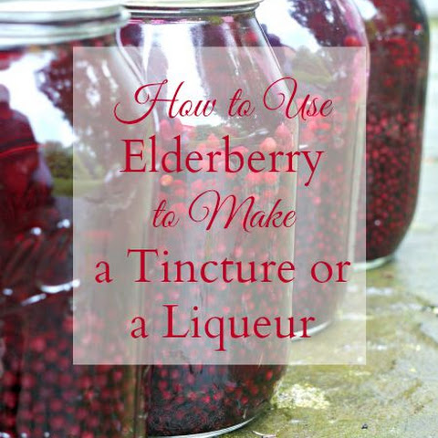 Elderberry Tincture or Liqueur