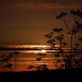 evening beauty  by Paul Rayney - Landscapes Sunsets & Sunrises ( sky, sunset, plants, flowers, sun )