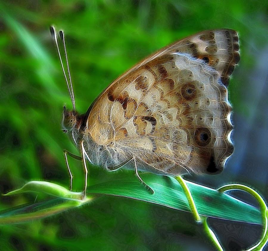 Butterfly by John Rizar - Digital Art Things