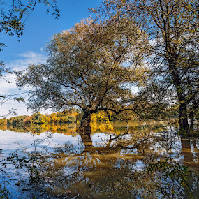 After the long rains by Alexander Bakhur - Nature Up Close Trees & Bushes ( leaf, autumn, fall, leaves )