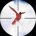 Desert Bird Shooting Hunting Game 2018