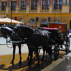 Vienna, Austria  by Ray Anthony Di Greco - Transportation Other ( historical districts, animals, cities, transportation )