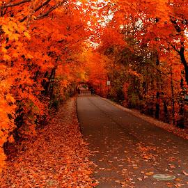 The Autumn-scape ! by Avishek Bhattacharya - City,  Street & Park  City Parks ( indiana, monon trail, autumn, fall, leaves, in, foilage, carmel )
