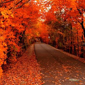 The Autumn-scape by Avishek Bhattacharya - City,  Street & Park  City Parks ( monon trail, fall, leaves, in, autumn, foilage, carmel, indiana,  )