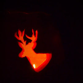 Glowing Buck by Lori Gauthier - Novices Only Objects & Still Life